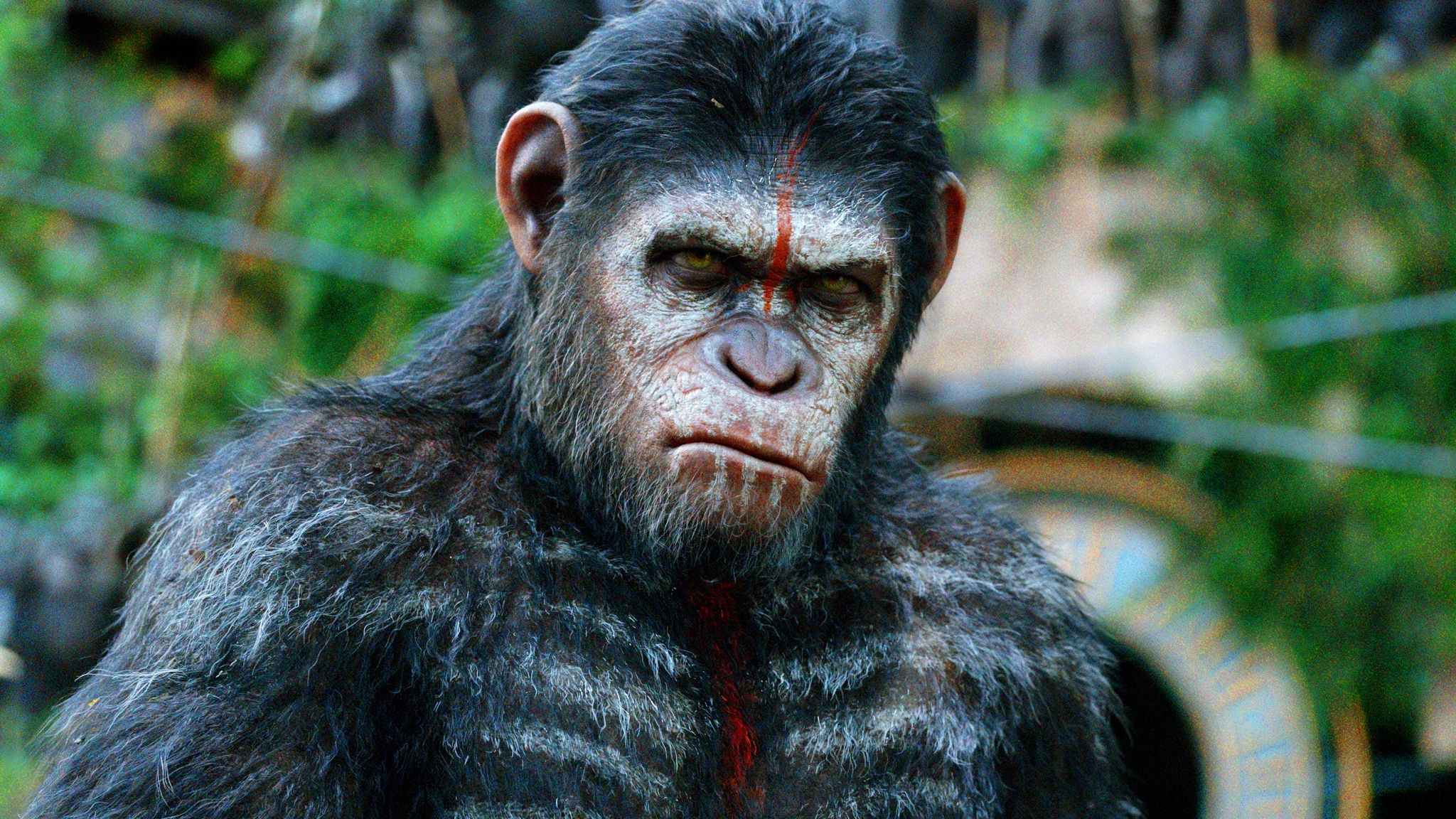 Dawn Of The Planet Of The Apes Dc Filmdomdc Filmdom